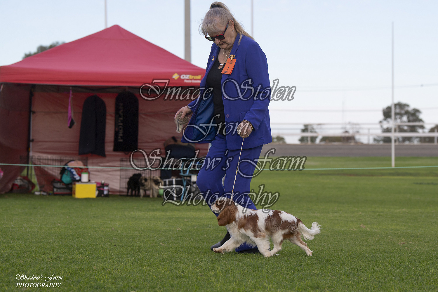 2019 BROKEN HILL DOGS N DUST CHAMP SHOWS