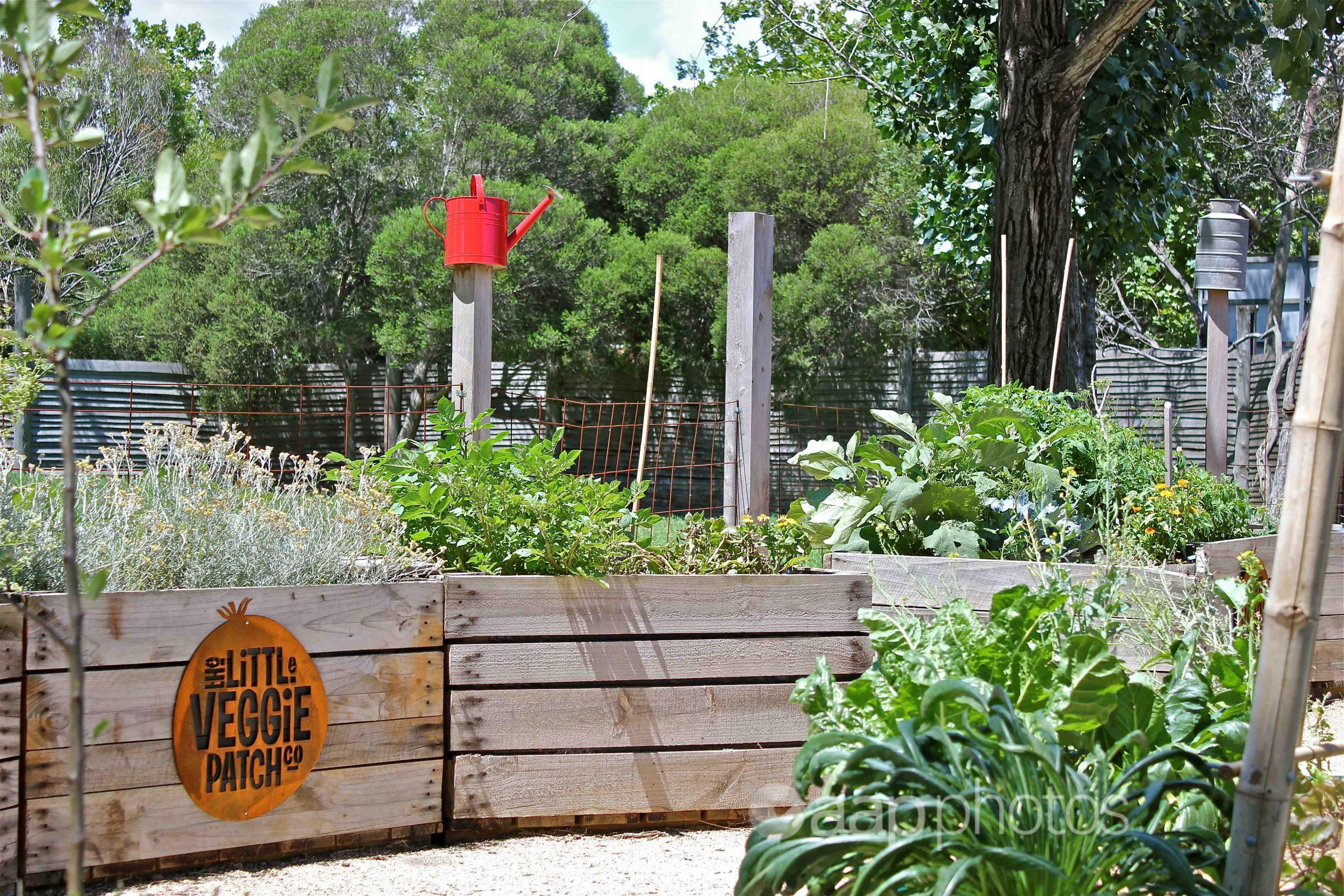 A vegetable garden in the Melbourne suburb of Collingwood.