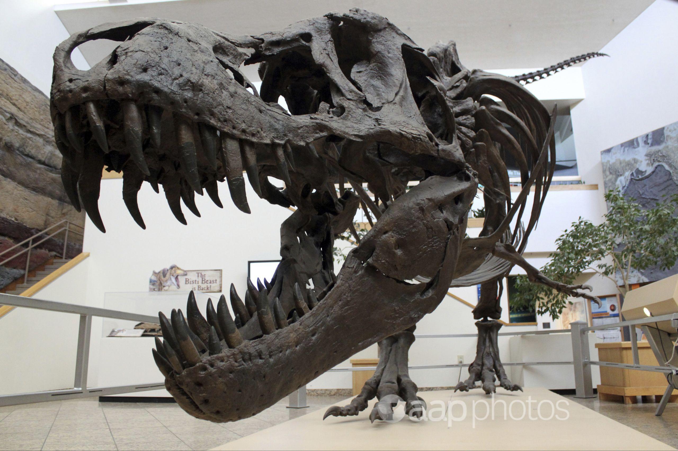 A tyrannosaurus rex model