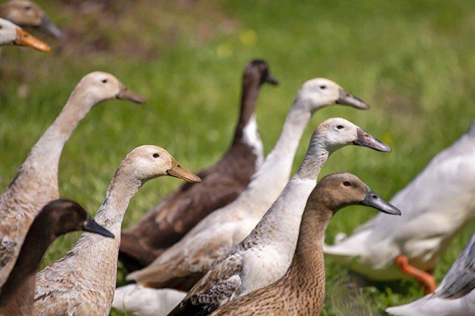 Ducks Angove Organic Warboys Vineyard Mc Laren Vale 2