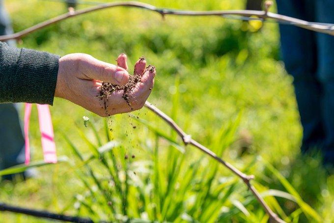 Hand Soil Organic Web