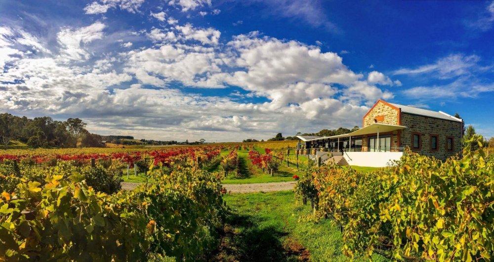 angove mclaren vale cellar door autumn