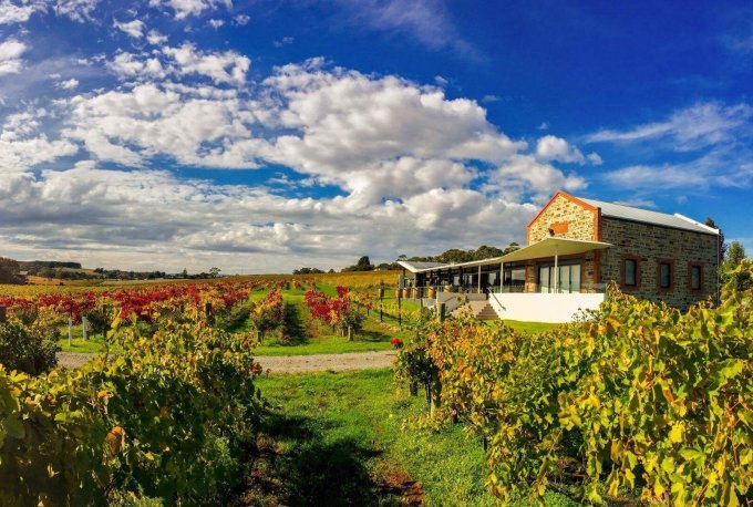 angove autumn mclaren vale cellar door