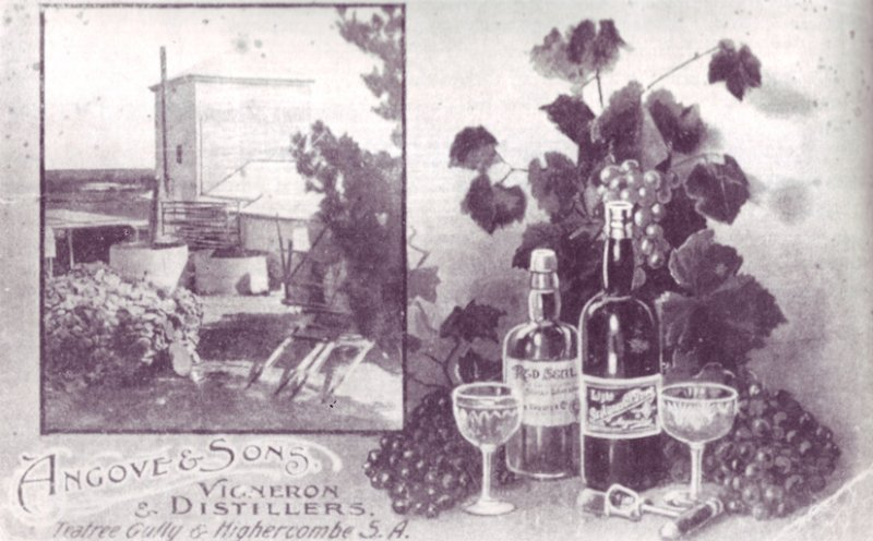 angove and sons postcard