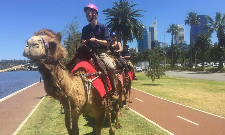 People on a camel ride by the Swan River
