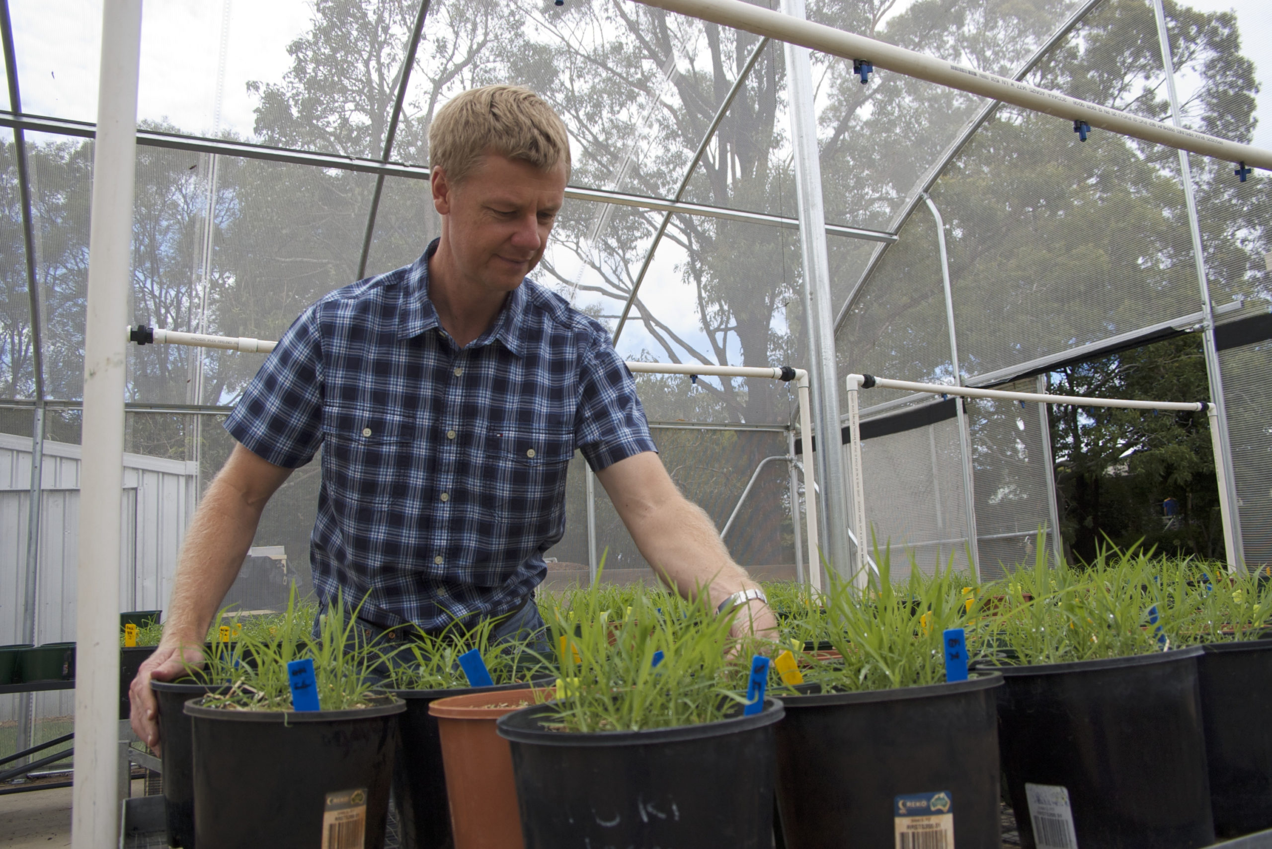 Dr Michael Widderick, Principal Research Scientist (Weeds), Queensland Department of Agriculture and Fisheries says new technology could make it easier to incorporate a non-herbicide option into the highly effective double knock weed control tactic.