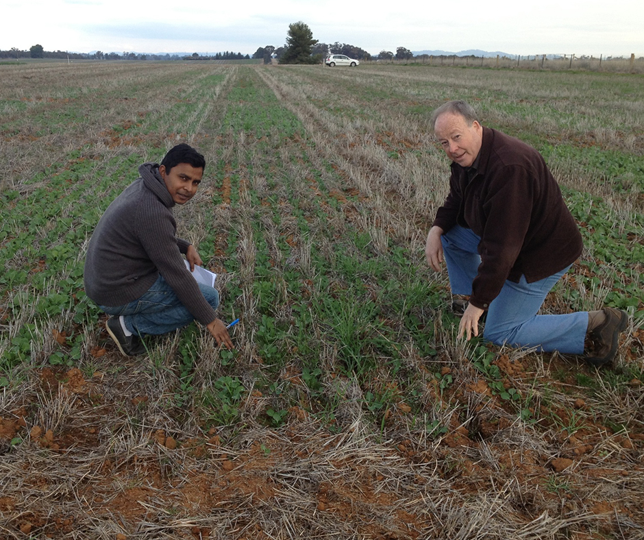 Professor Jim Pratley (right) and PhD student Md Asaduzzaman are very keen to see the research work on allelopathy in canola continue as the importance of non-herbicide weed control measures become increasingly important in farming systems.