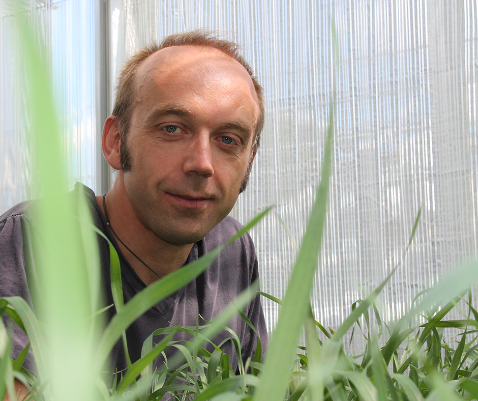 UWA Research Fellow, Roberto Busi monitored sites where RR ready canola had established as a weed and has shown that RR canola does not persist in the environment for longer than three years, the same as conventional canola varieties.
