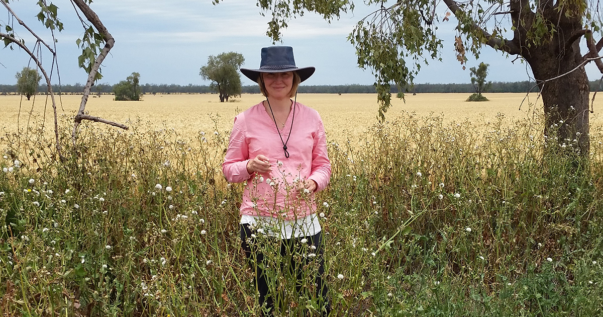 DAF research scientist Annie van der Meulen says glyphosate resistance in common sowthistle is more widespread than previously thought. She is encouraging growers to be involved in the DAF's herbicide resistance testing during the summer cropping season.