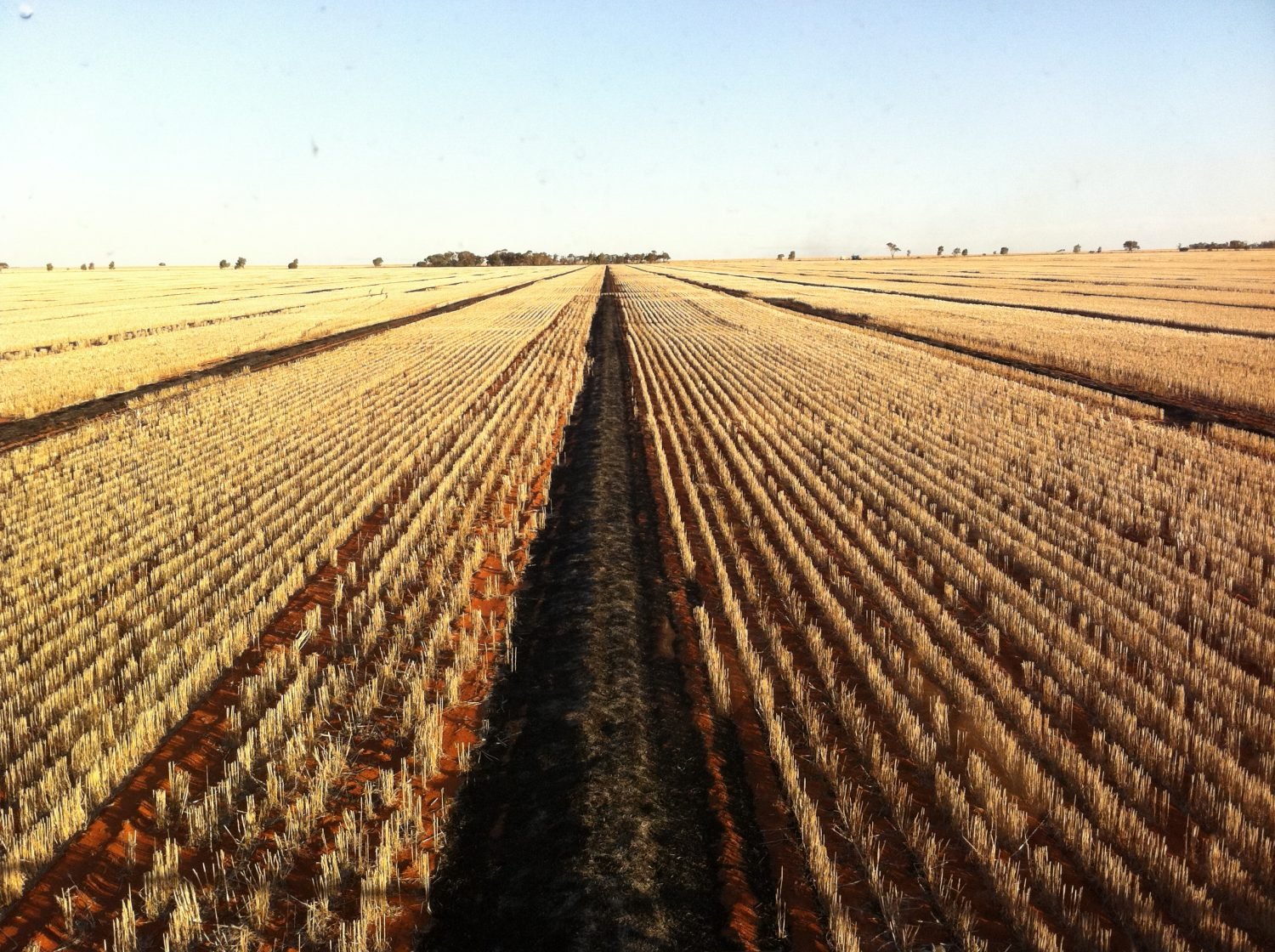NWB to tackle sclerotinia and the Australian Ground Spray Calculator