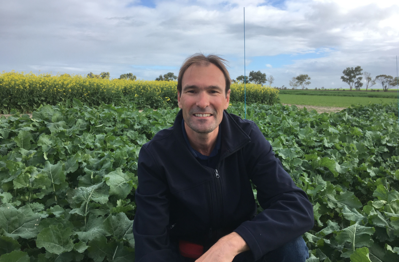 Epic focus paddock results & using S-Metolachlor effectively