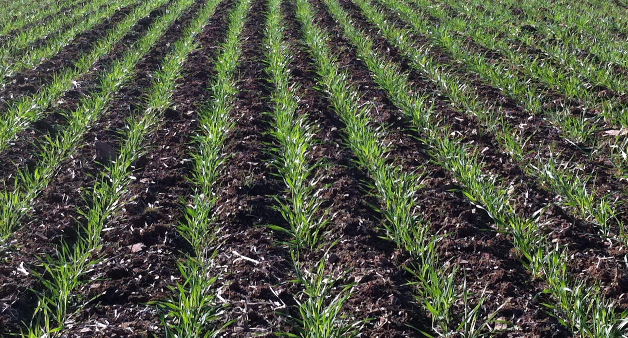 Grow a crop worth frosting