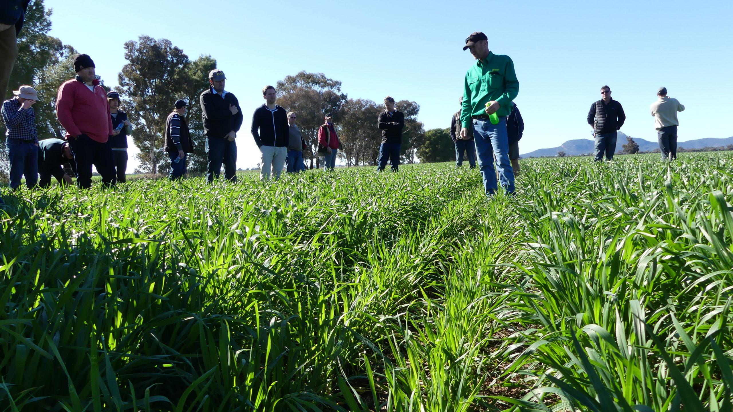 WeedSmart Week in Wagga Wagga (Part 1)