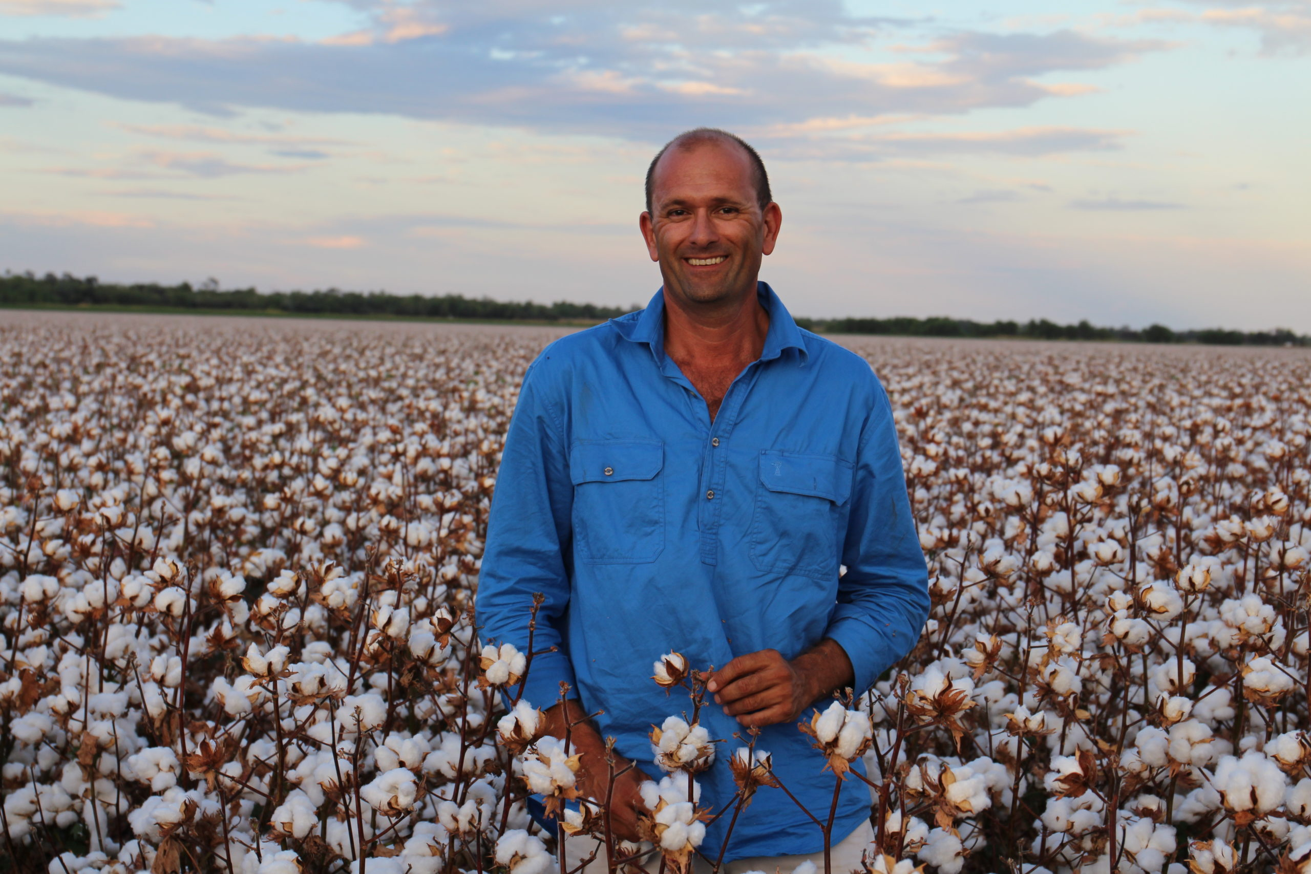 Herbicide degradation in dry soil and volunteer and ratoon cotton control