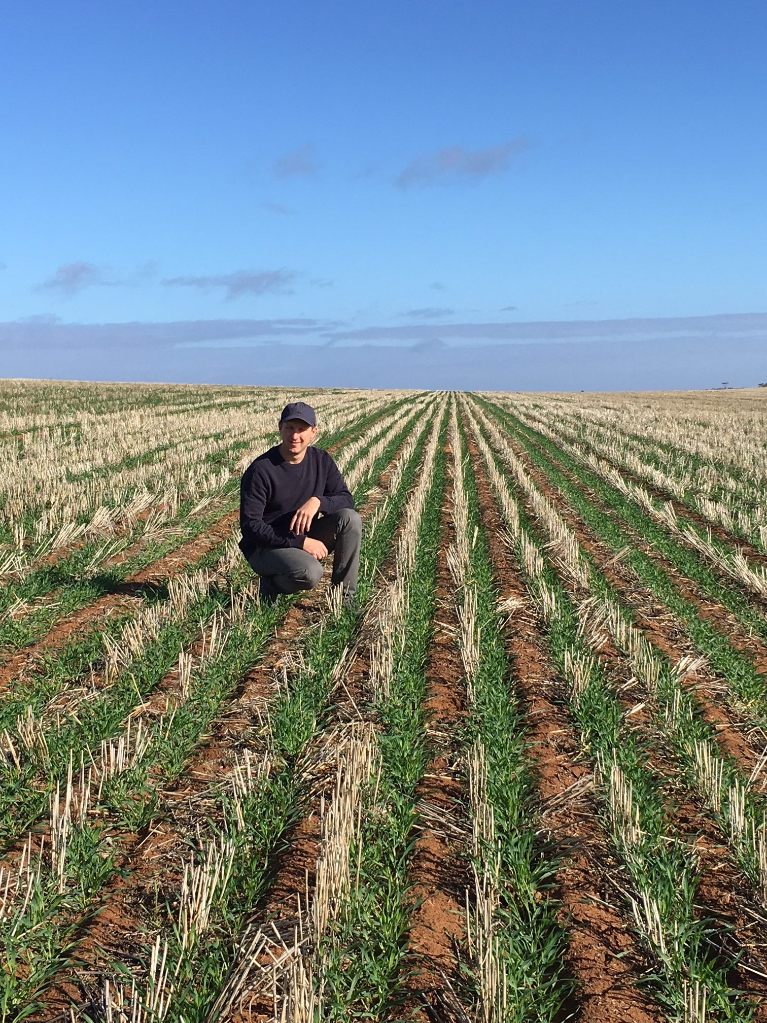 Blackgrass control in the UK and the pros and cons of paired rows