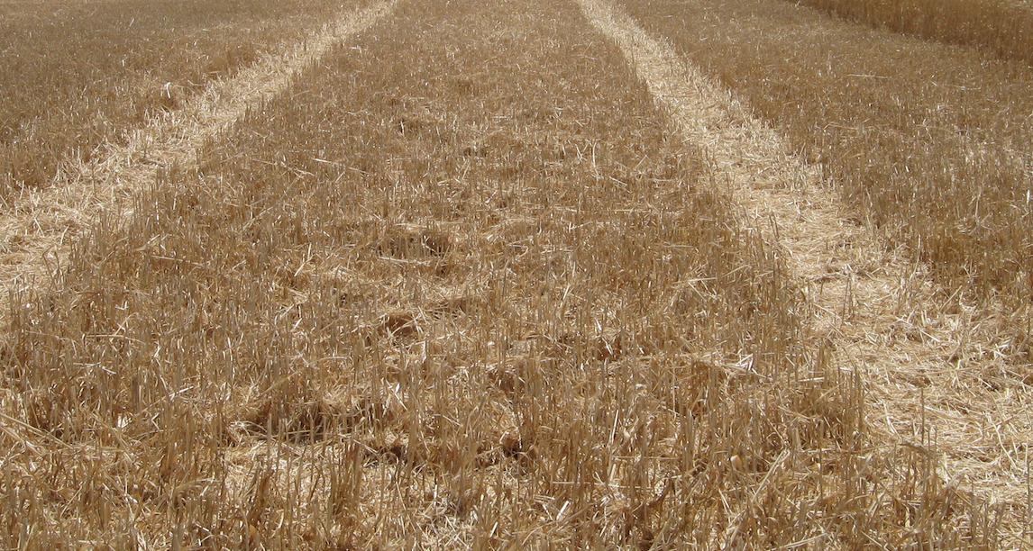 Harvest Part 2