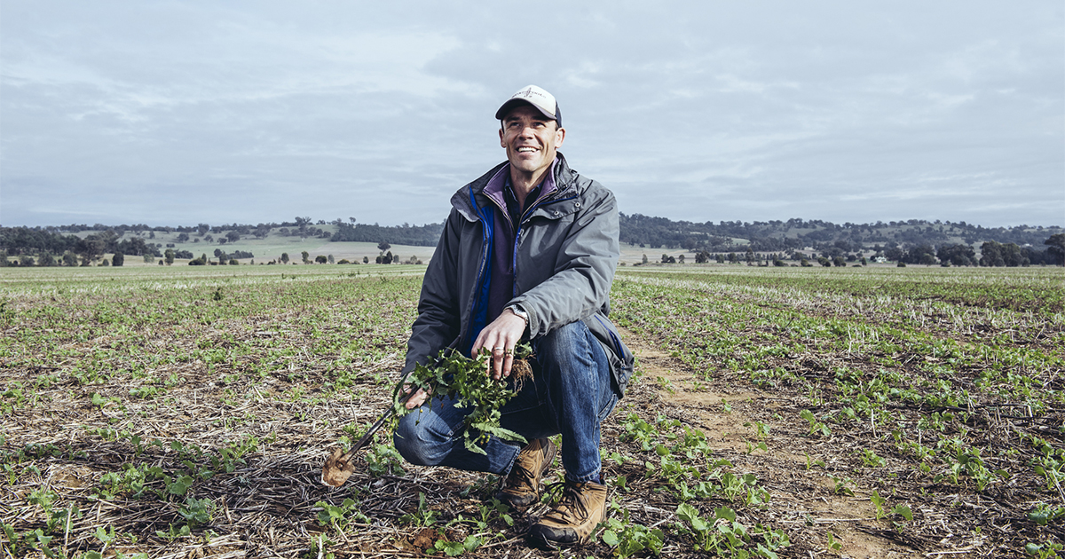Farmers share their harvest experience with weed seed impact mills and GRDC Updates