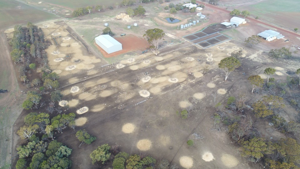 Grazing and baling chaff dumps and Mateno Complete overview