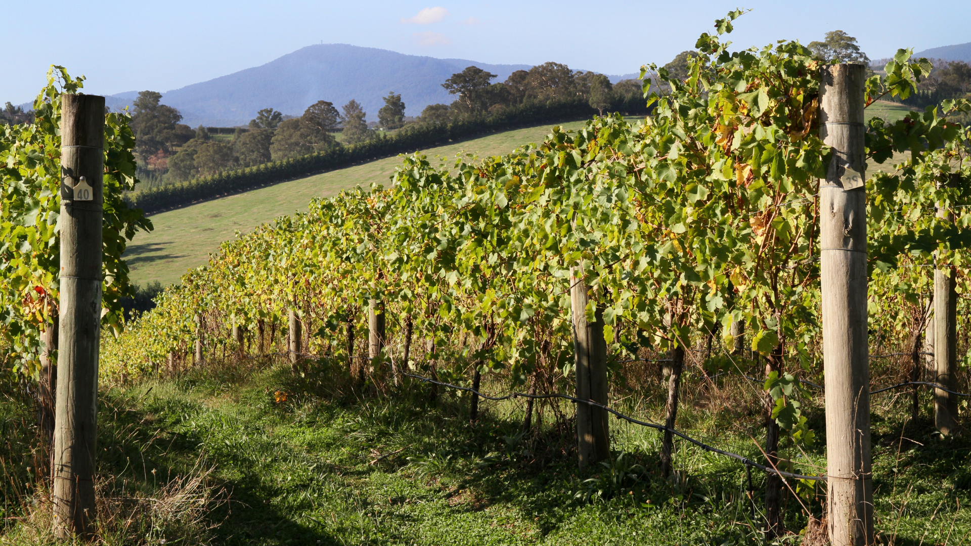 Sustainable glyphosate use in Australian orchards and vineyards