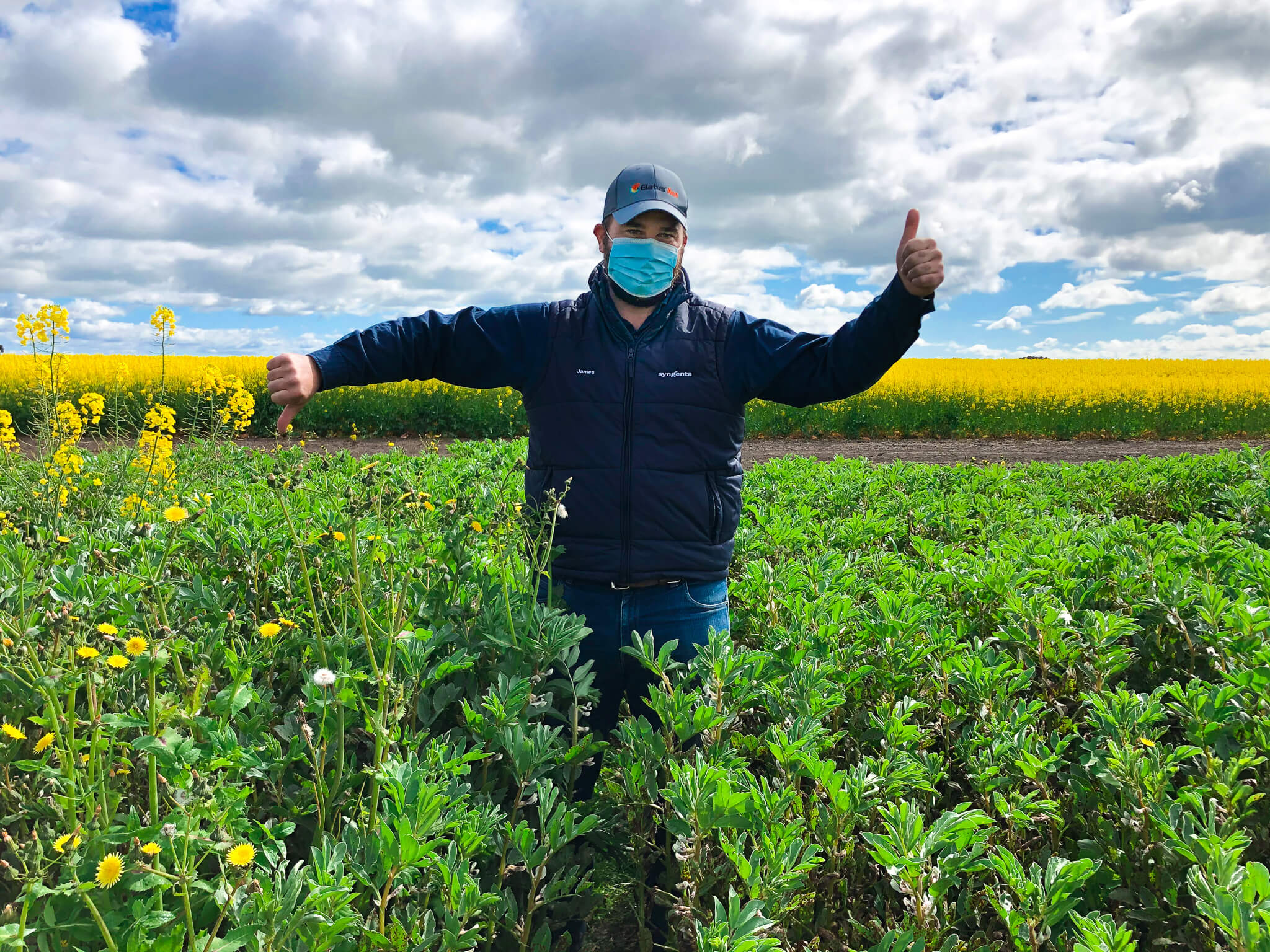 Lupins & other pulses to benefit from new addition of Reflex in weed control tool kit