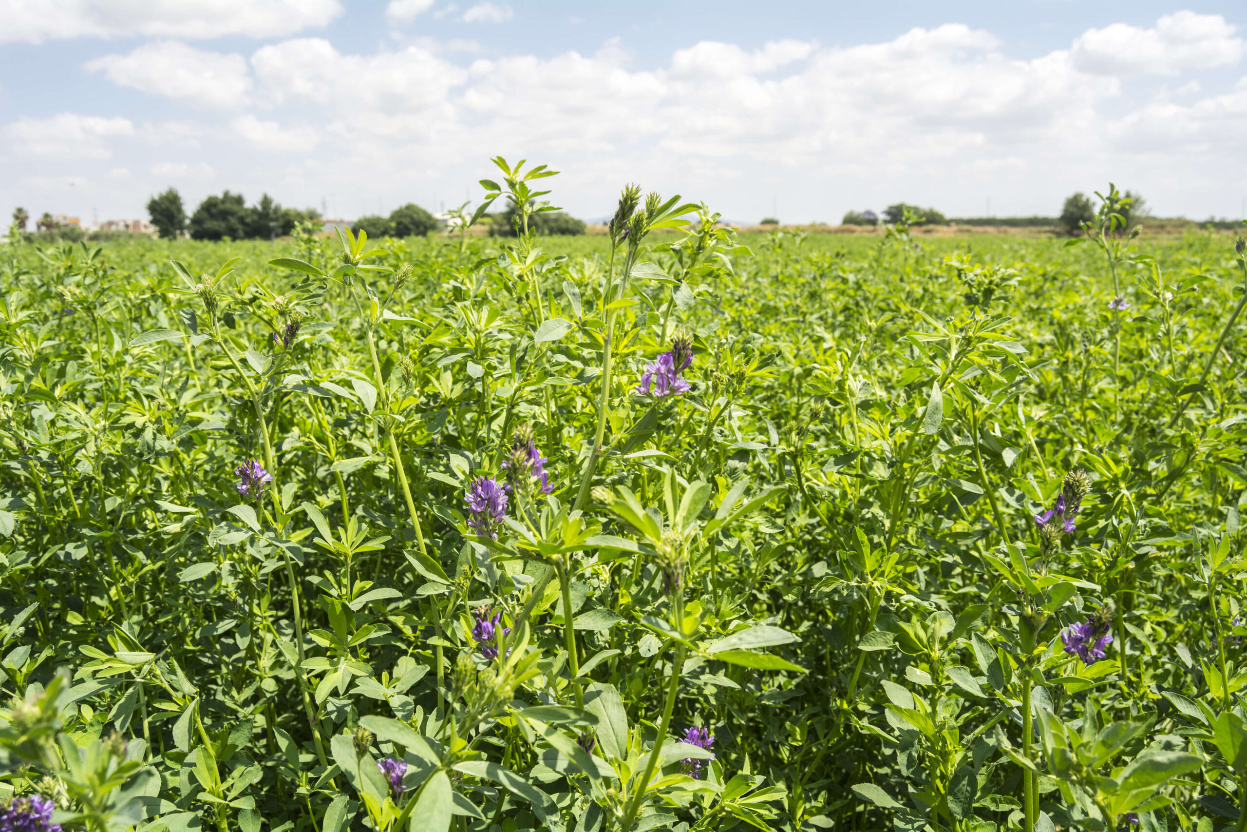 Group G tips, lucerne as a fence line weed control tool & N placement effect on weed growth