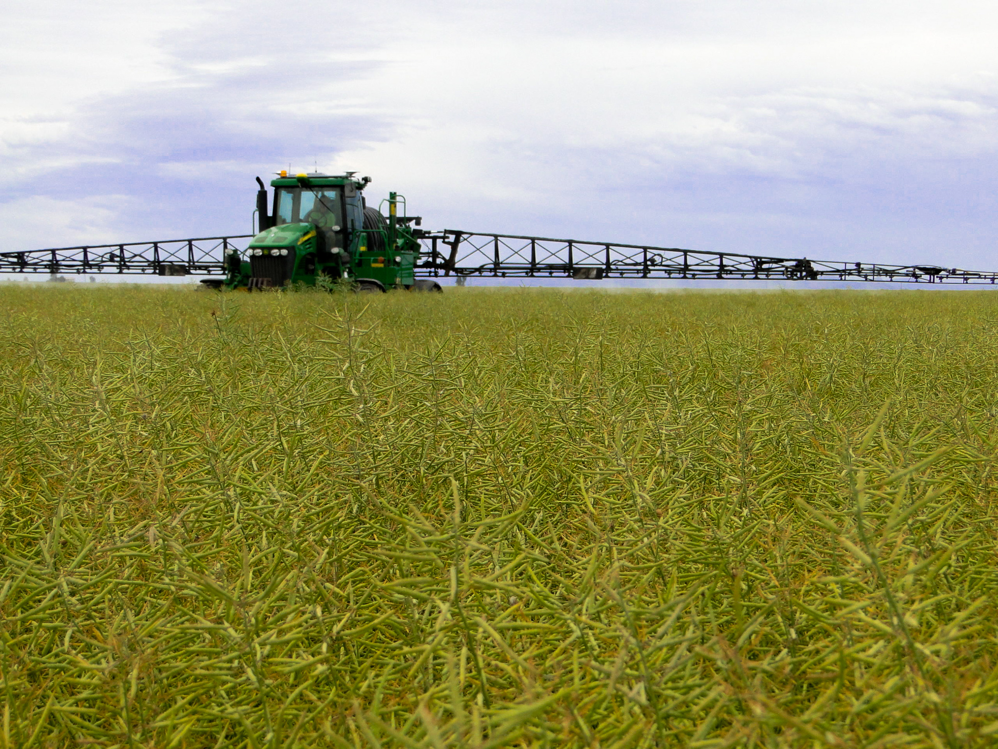 Why crop topping is a great tool to prevent weed seed set