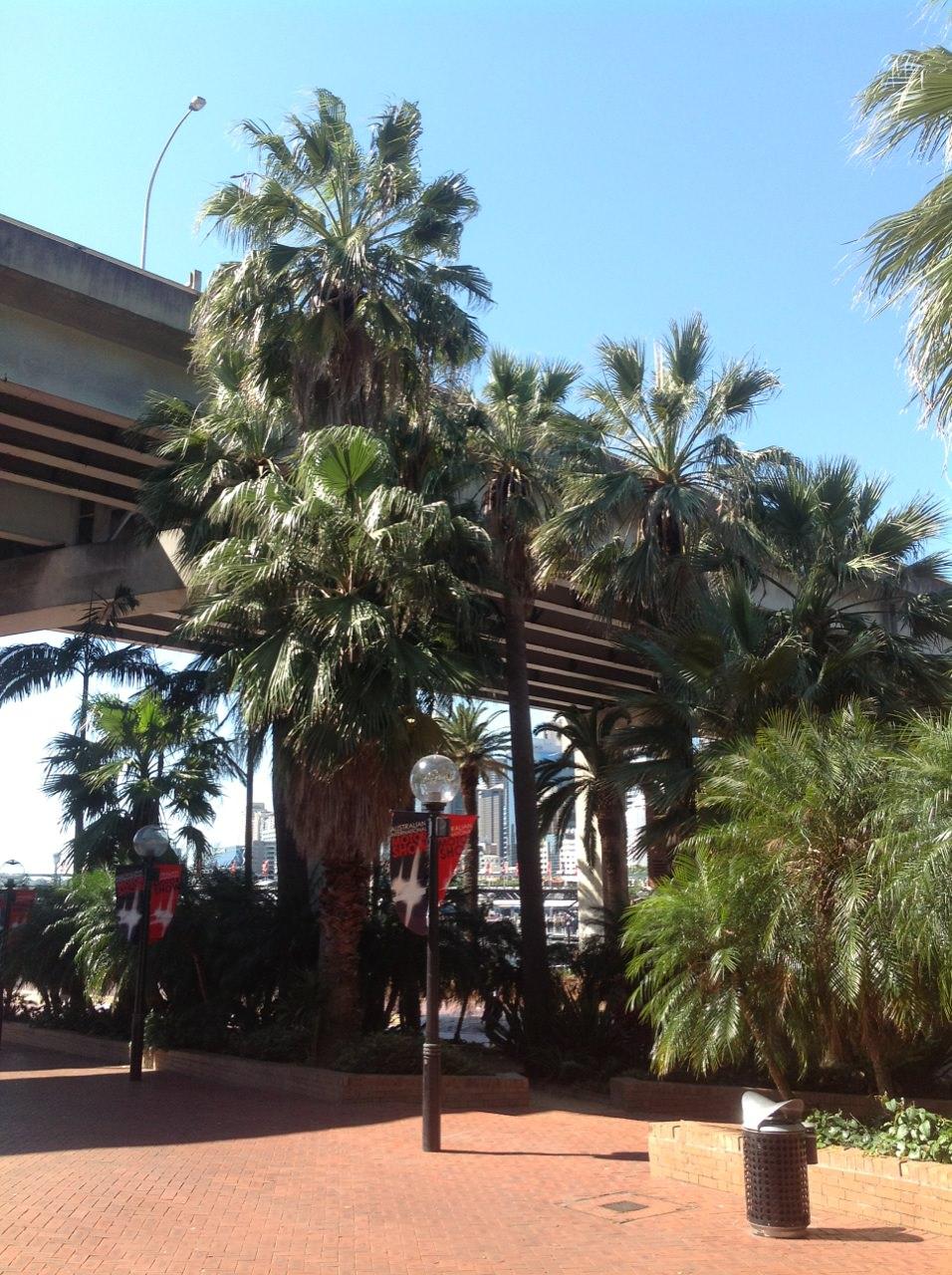 Washington and American Cotton Palms