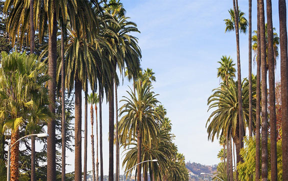 Los-Angeles-Palm-Street-Bouelvard