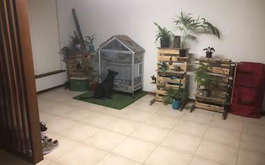 House share Balcatta, Perth $150pw, 3 bedroom house