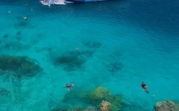 Snorkel the Great Barrier Reef from Port Douglas Aboard a Silversonic Dive Boat