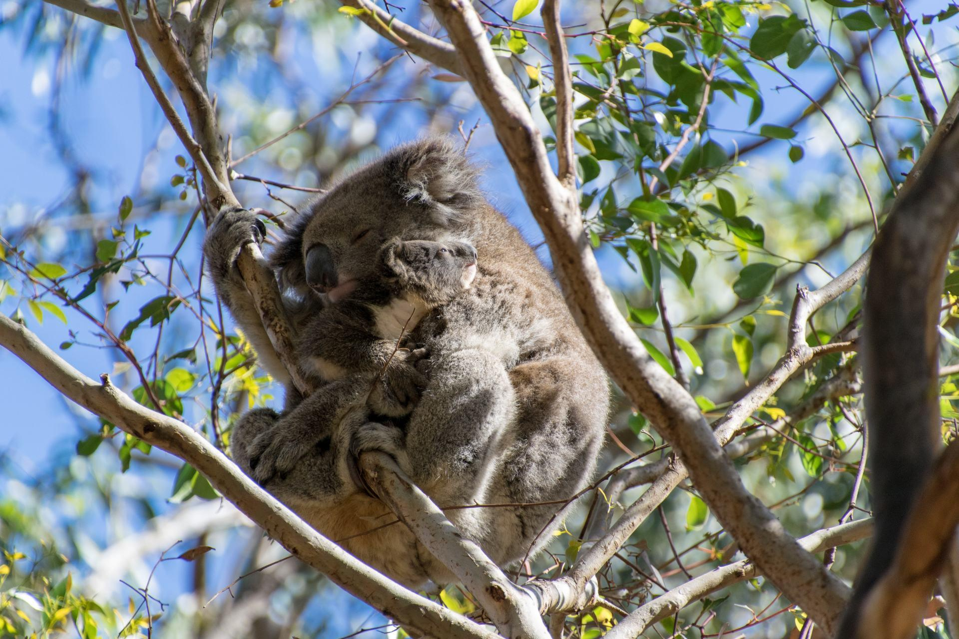 Discover the Unique Wildlife & Landscapes of South Australia on this 5-Day Adventure