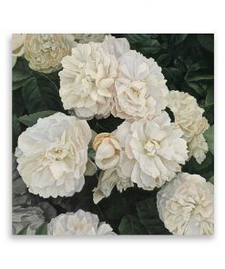 English Roses Square Canvas Art