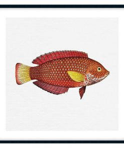 Tropical Fish Collection #8 Wall Art