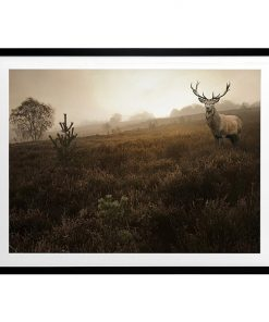 Stag Abound Framed Print