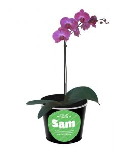 Sam the Orchid