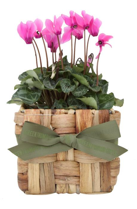 The Cyclamen Seagrass Gift