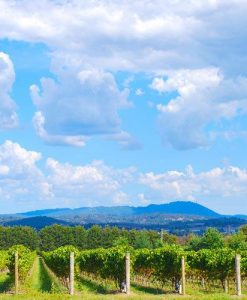 Yarra Valley Gourmet Tour For 2