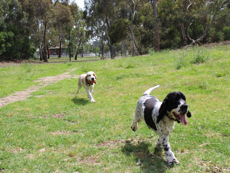 There's plenty of room to play fetch at the Ford Park fenced dog park.