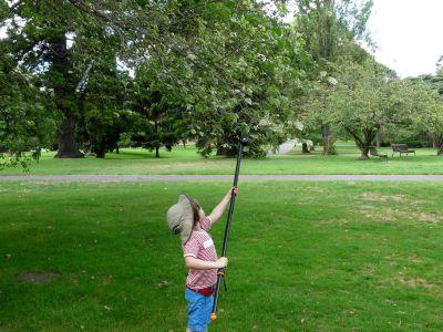Kids get involved in elm leaf sampling