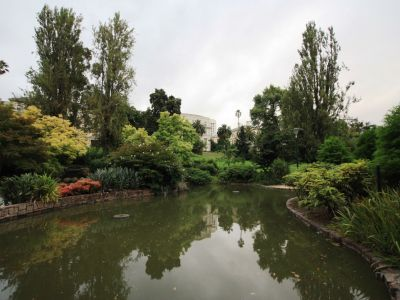Treasury Gardens wetland