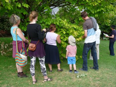 Citizen Foresters collect elm leaf samples