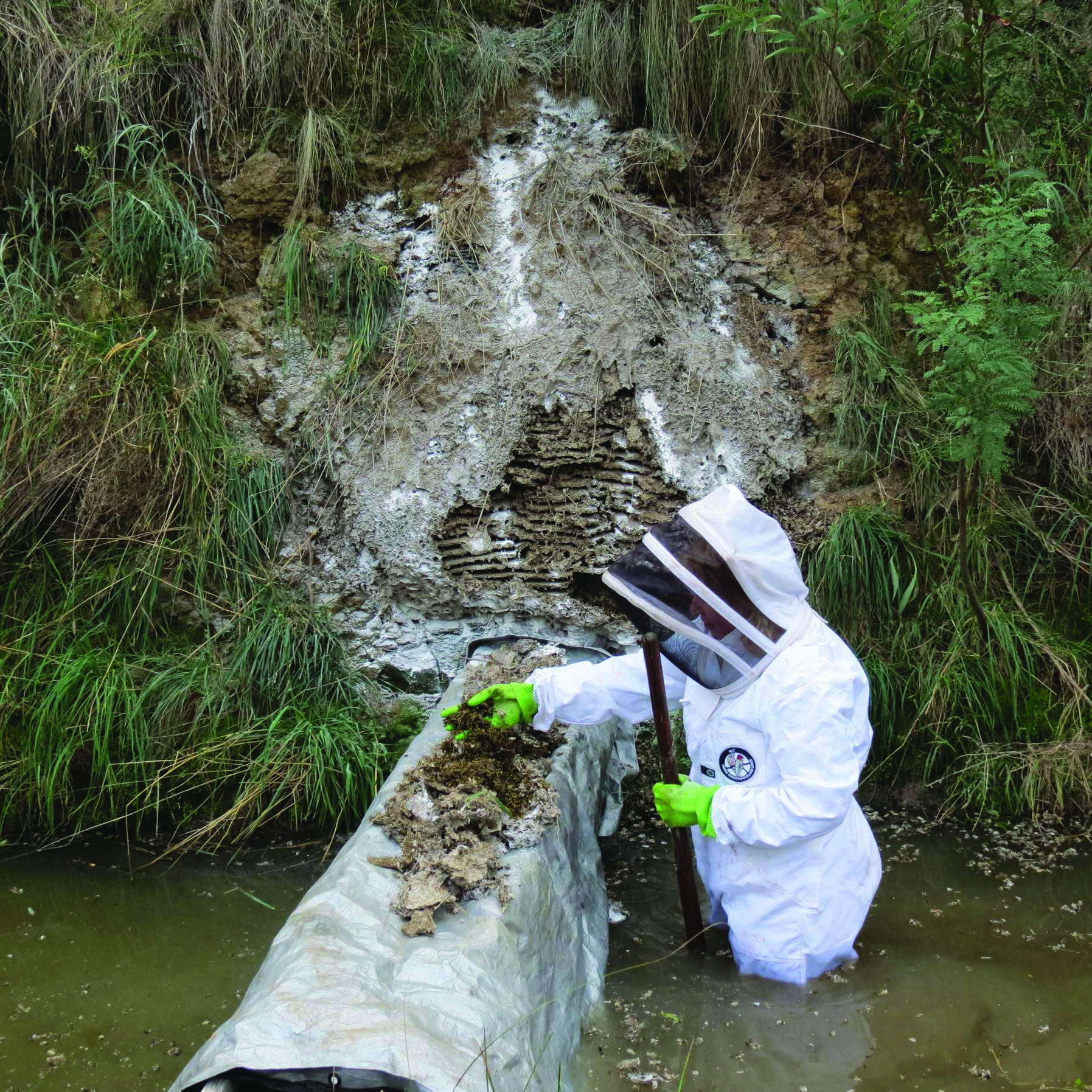 Picture of a biosecurity officer removing a nest from a reserve