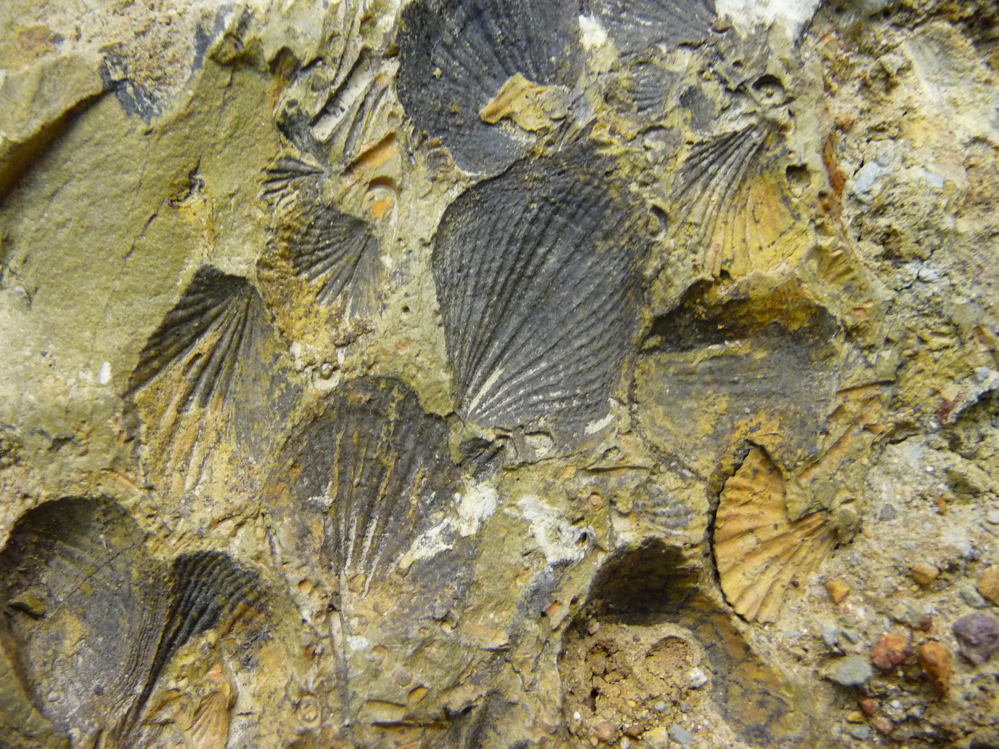 Woolshed Creek fossils