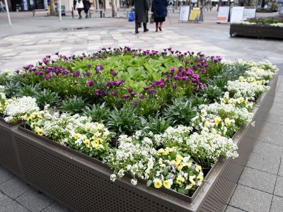 Flower planters at City Walk