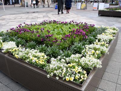 Flower planters at City Walk