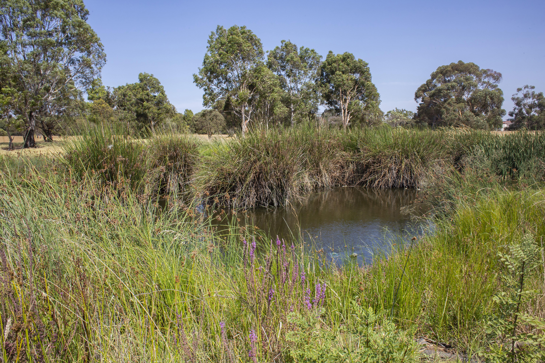 elsternwick park wetlands