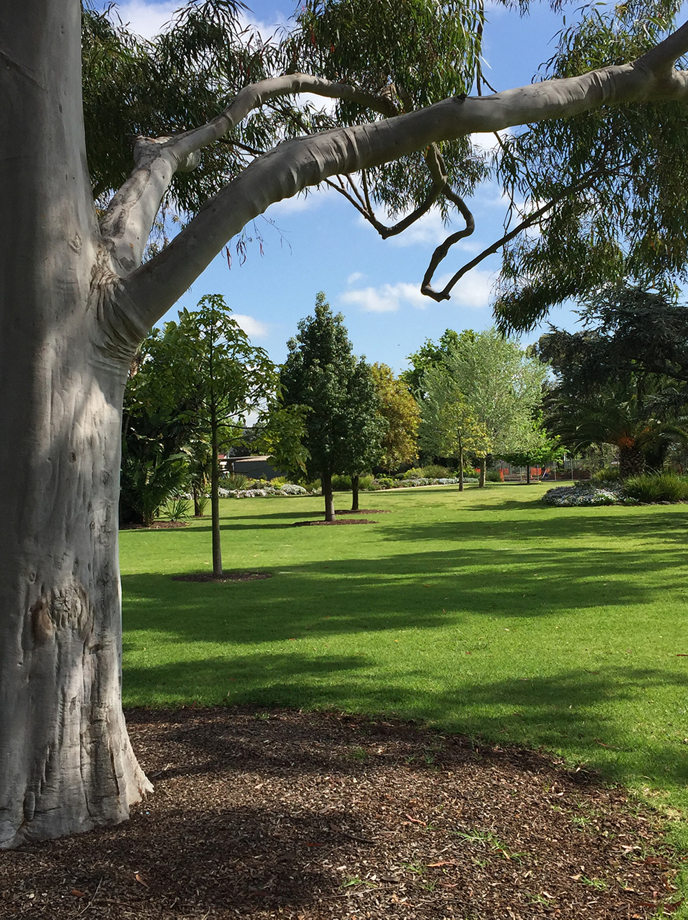 Grassed area and mature trees