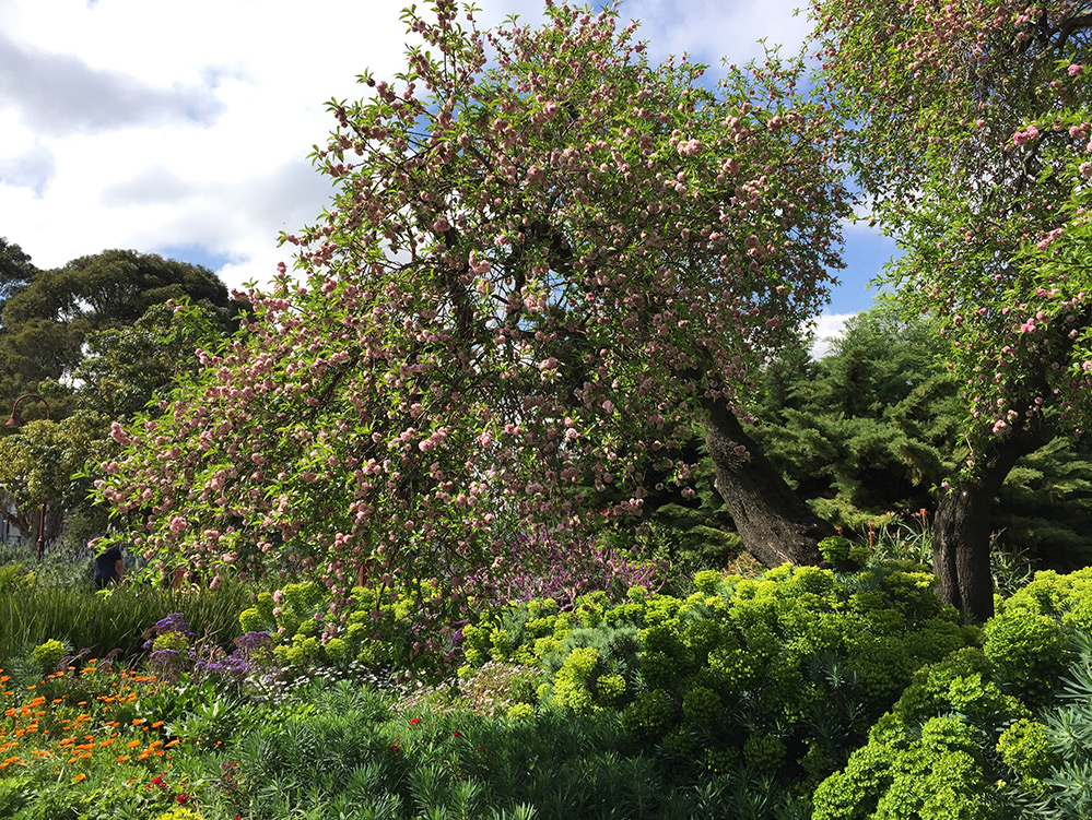 Flowering tree and gardens