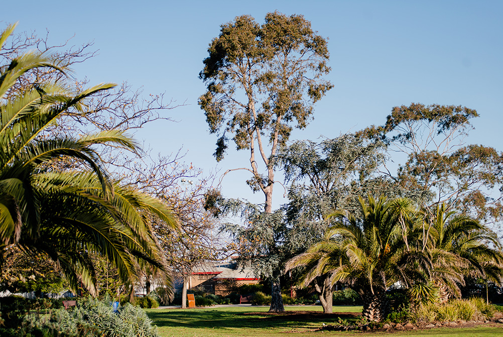 trees, garden beds and grassed area of the gardens