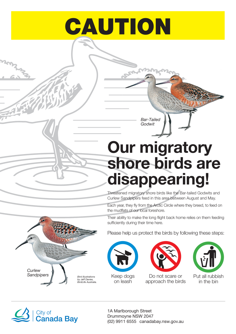 Poster about migratory shorebirds